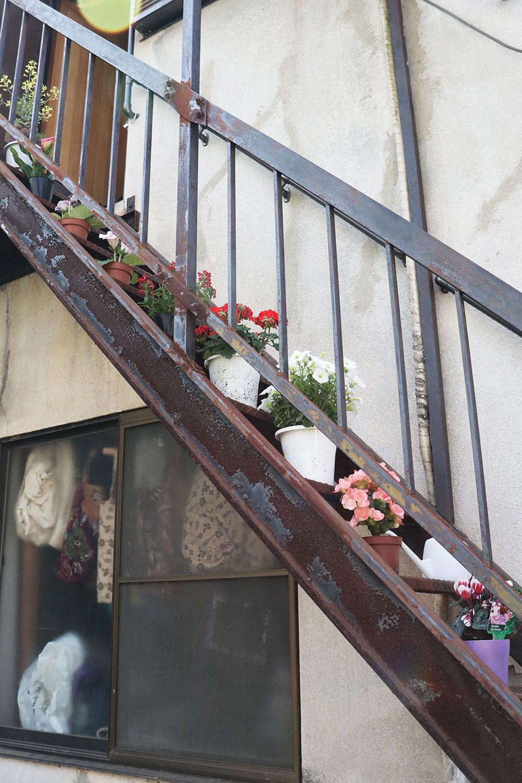 屋根のある階段には直射日光に弱い植物が並んでいる。