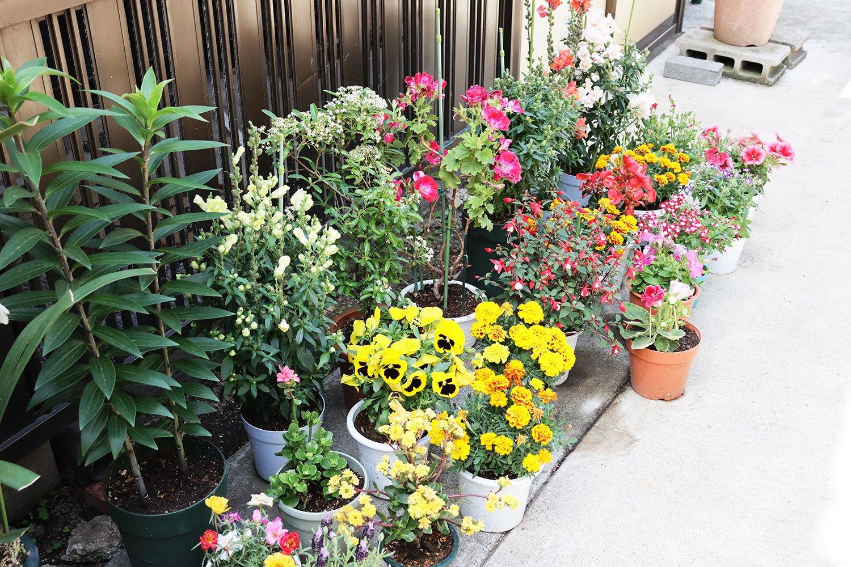 塀の脇には、手入れ中の花が並ぶ。