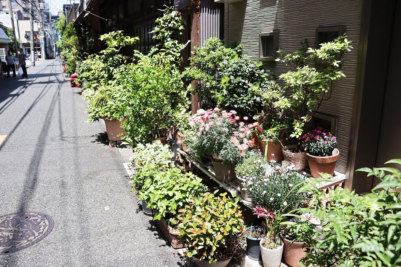 路上園芸ストリート。