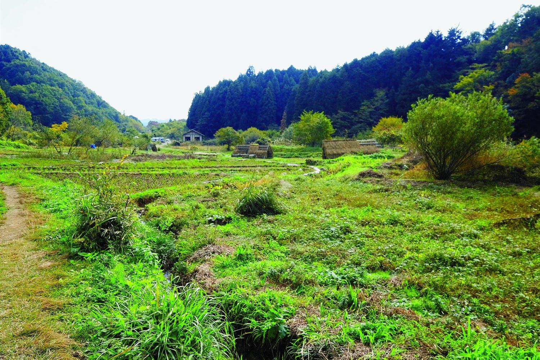 中央湿地の奥のほうから見た風景。左側に溜池がある。ちなみに横沢入の里山保全地域の面積は約48.6ha。