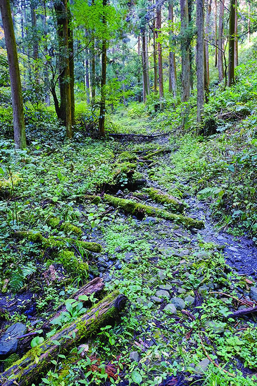 富田ノ入の先の道は沢状のところもあり、湿っている。