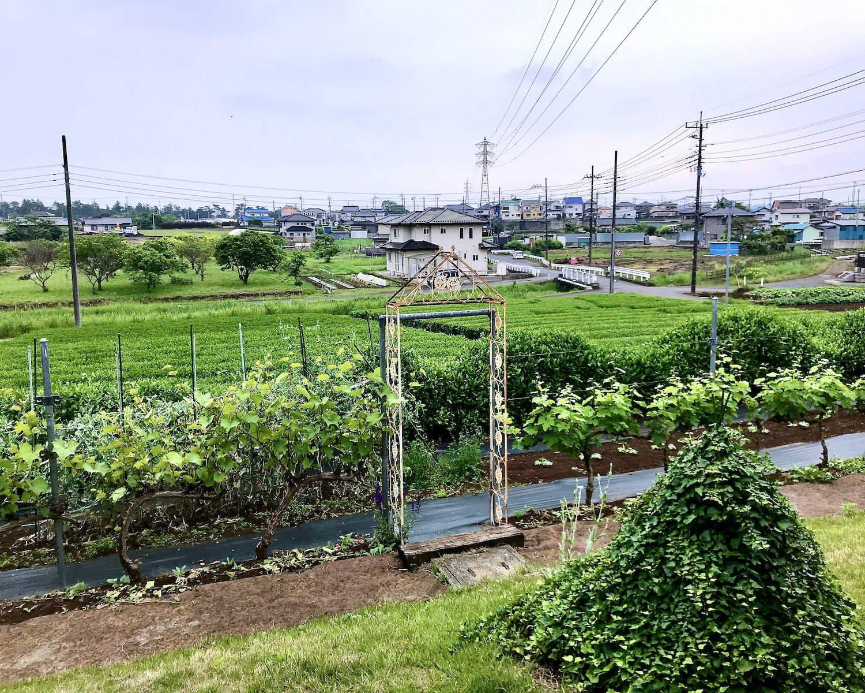 茶畑の管理まではさすがに手が回らず、お茶屋に任せているという。飯能市は、入間市や所沢市、狭山市と並ぶ狭山茶の産地だ。