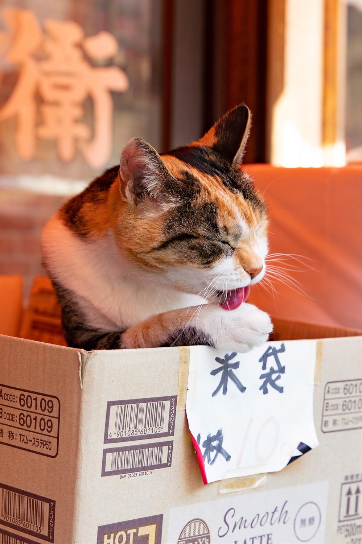 店頭の米袋用箱にすっぽり。四方を囲われ落ち着く段ボールは、猫好み。