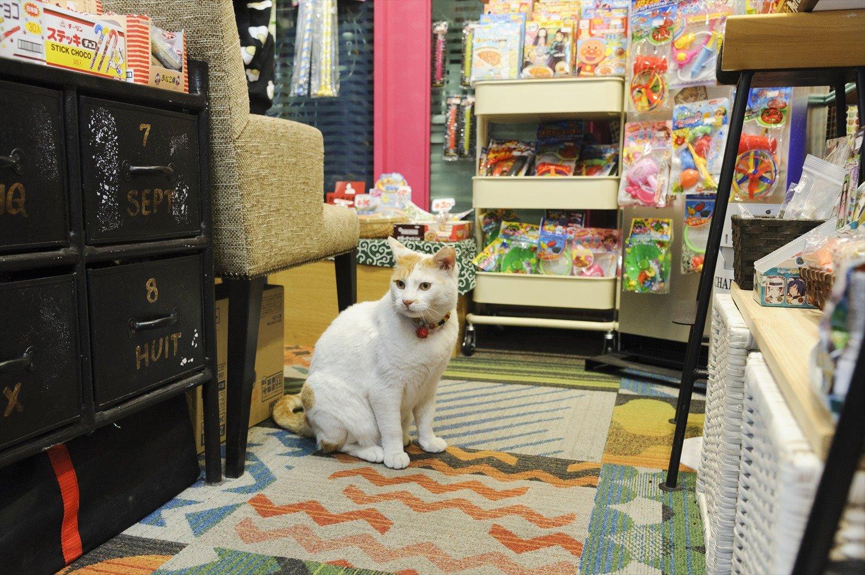 懐かしい駄菓子や雑貨が並ぶポップな店内に、白毛が映える。