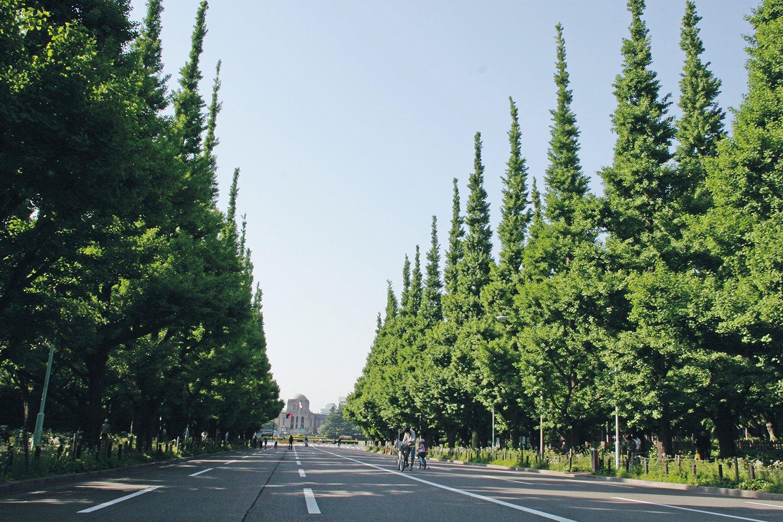 06_明治神宮外苑イチョウ並木