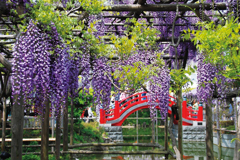 04_亀戸天神社