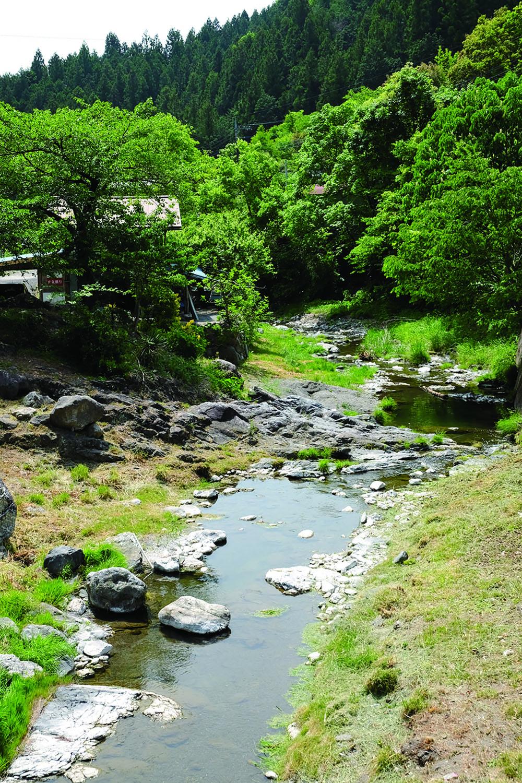 沢口集落付近の石間川。取材時は5月で、ちょうどハヤの産卵期にあたり、川にはハヤの群れが。