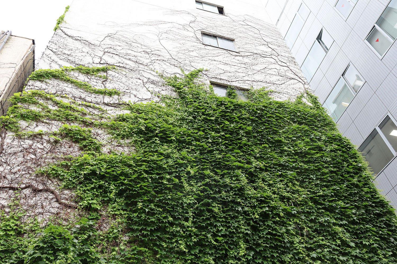 建物を徐々に緑に塗り替えるツタ。