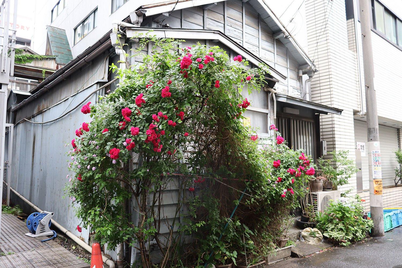 レトロな建物にピンクのバラが。
