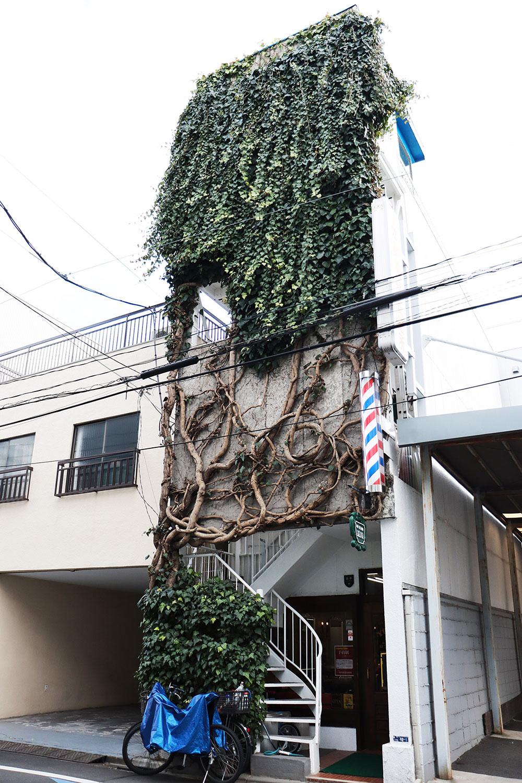 店主自ら年2回手入れしているという『メンズヘアーユタカ』の見事なキヅタ。芸術的な植物壁画は細やかな手入れの賜物。