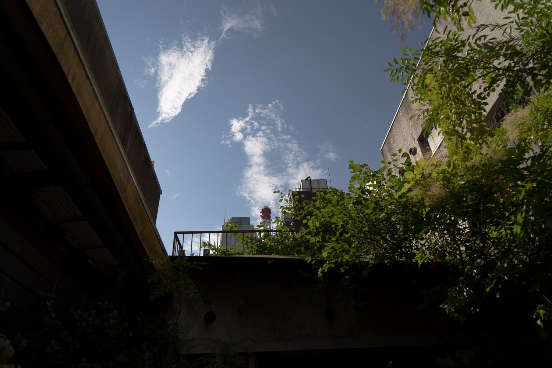 屋上で銀座産のハーブやトマトを育てて、料理や飲み物に使うプロジェクトが進行中とのこと。