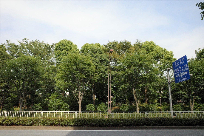 清澄白河カフェ_mammacafe151A_木場公園