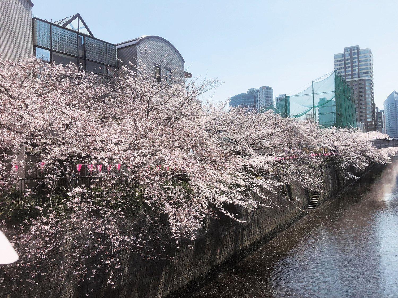 4_目黒川