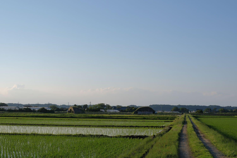 畦道の先に見えるのは2基の掩体壕。