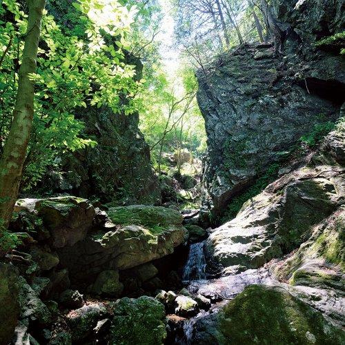 滝と渓谷の山、白谷沢のゴルジュから棒ノ折山の長い尾根歩きを楽しむ。【東京発日帰り山さんぽ】