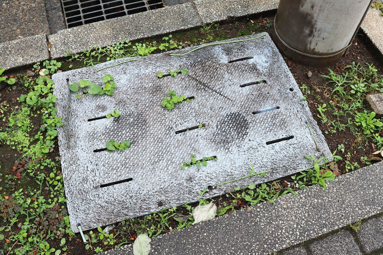 植え込みに置かれたバスマットの穴から顔を覗かせる緑。