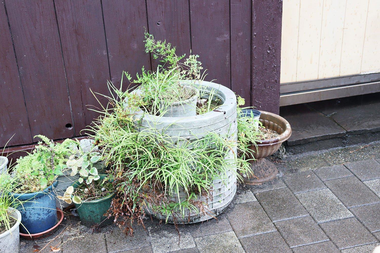 洗濯槽の穴から勢いよく吹き出すシダ植物。