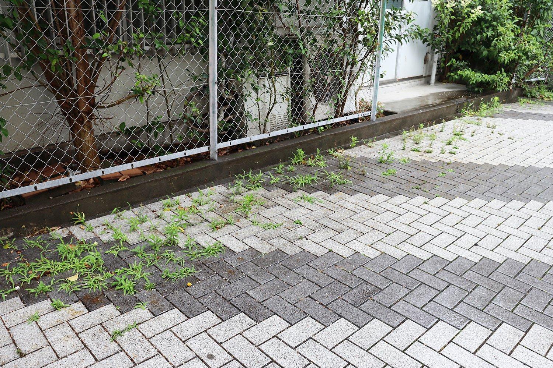 舗装から生える緑。「向こうにいくにつれて岸になる感じ」と髙山さん。
