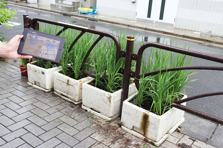 かつて田んぼだった場所で育てられる、米の苗。昔の地図と並べて興奮!