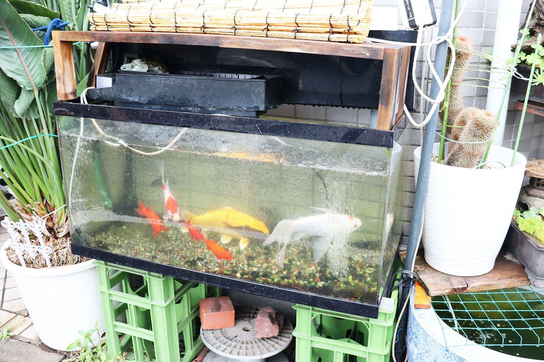 飲料ケースを台座にした路上水族館。