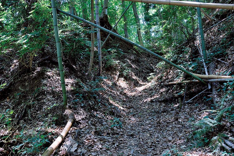 竹藪の中を通る江戸巡礼古道。