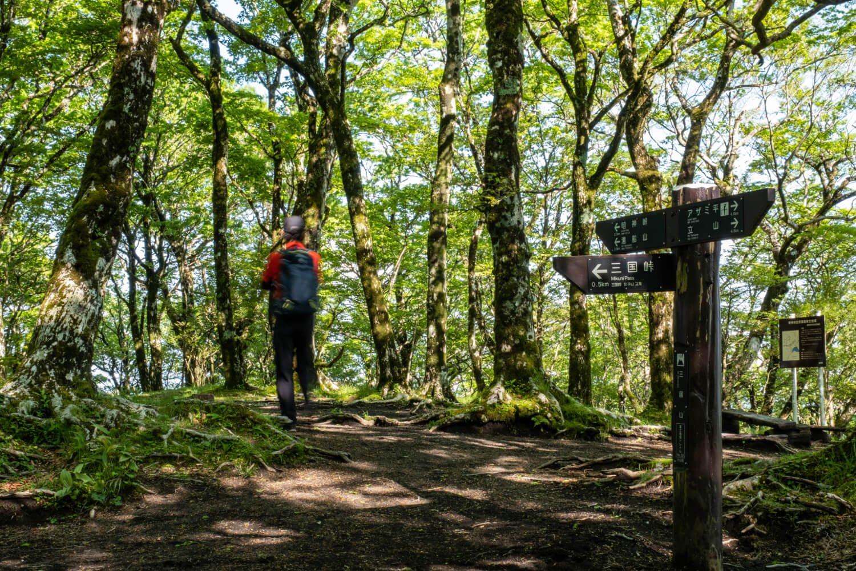 ブナやミズナラが生い茂る三国山山頂。