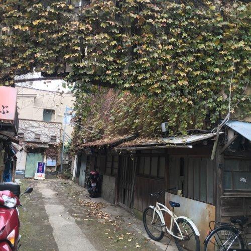 ネットで見かけるあの廃墟の真相は? 藤沢に「小鳥の街」があったころ