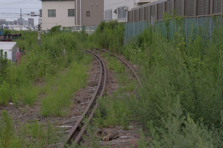 単線となった専用線。緩やかなカーブの先に瑞穂橋がある。手前の茶色いのは寝ている猫。線路と猫はよく似合う。