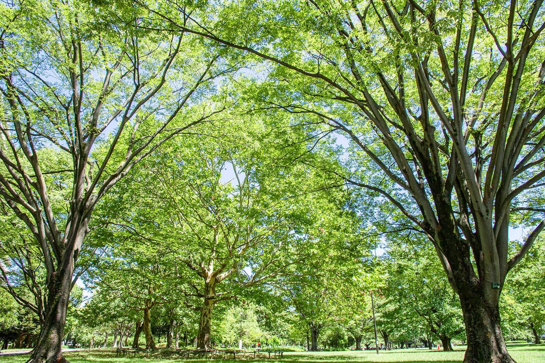 真夏の公園は暑い!  日差しキツい!  蚊が多い!  と大人が忘れかけていた現実のオンパレード。帽子とか日焼け止めとか、虫除けスプレーとかはしっかり準備はしていこう。熱中症対策の水分も忘れずに!