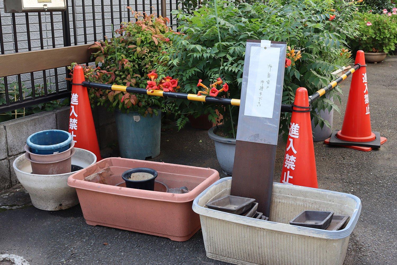 「ご自由にお持ちください」の鉢は、この街だとあっという間になくなりそうだ。背後ではノウゼンカズラをパイロンがしっかりと護っている。