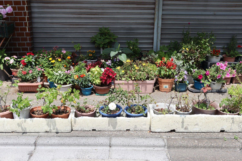 二列でズラリ。花道のような見事な園芸。