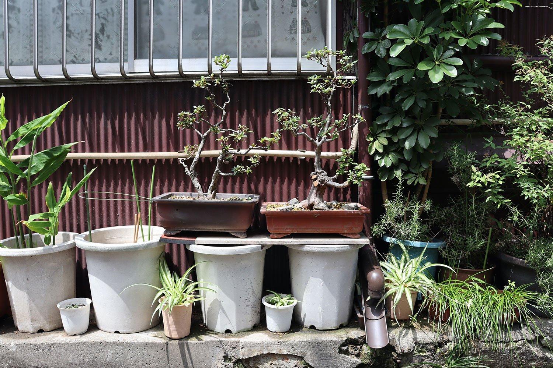盆栽オン鉢。白い鉢と小さな鉢が交互に並ぶ様子が、親子みたいでかわいい。