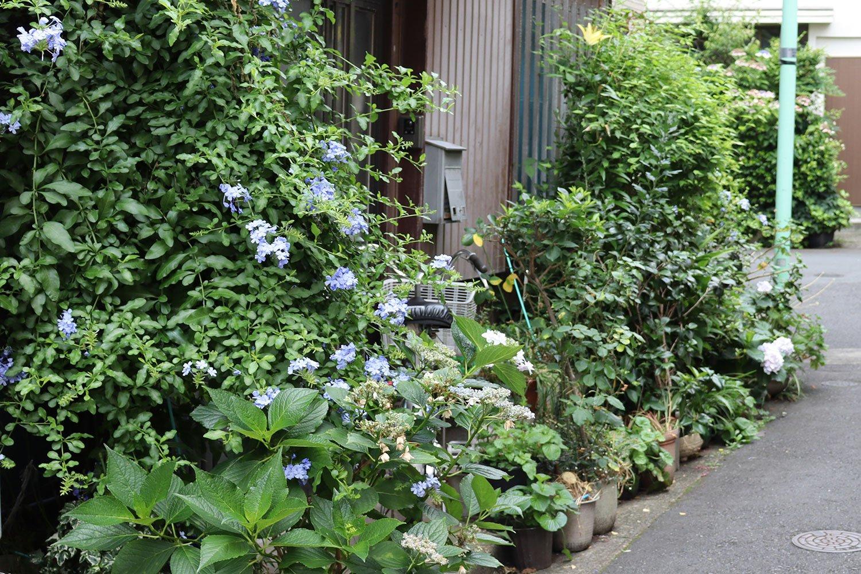 入り口をぎっしりと囲むみずみずしい植物。青いルリマツリが涼しさを演出。