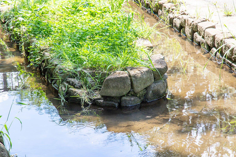 【大人の夏休み】ザリガニ釣り