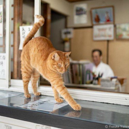 藤沢市『鵠沼伏見稲荷神社』のコウタくん【看板猫がいるお店】