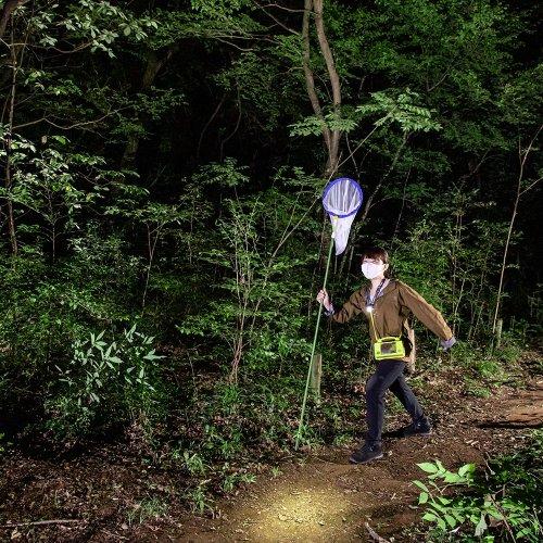 【大人の夏休み】真夜中の雑木林でカブトムシを狩る(ついでにクワガタも捕る!)