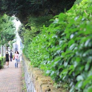 山手線沿線きっての高級住宅地・目白は、街ぶらも楽しい!【ぶらりマンション巡り】