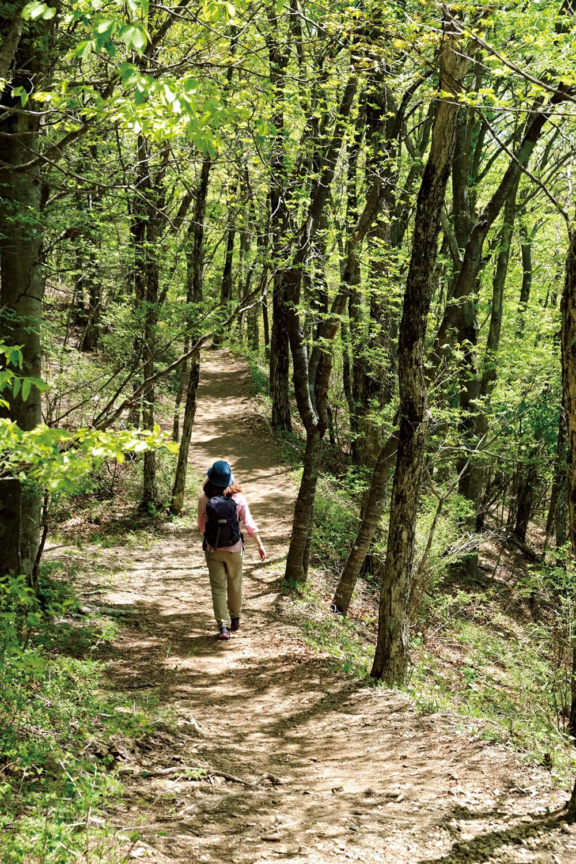 東京都と山梨県の境界が笹尾根で、三頭山から高尾山まで続いている。その距離約33km。あまり展望は望めない尾根歩きとなる。