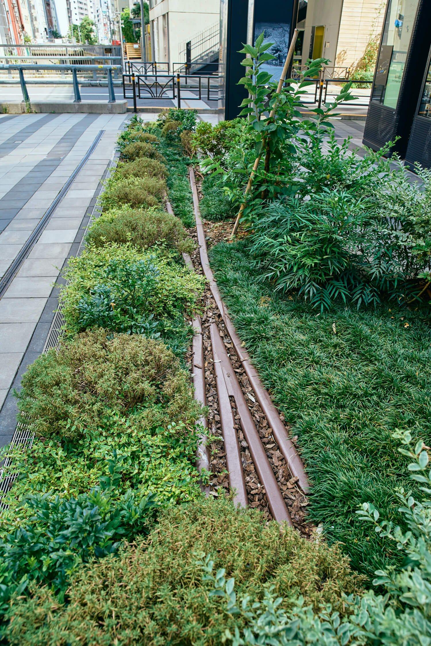 『渋谷ストリーム』前の金王橋広場の植栽に、実物の電路柱と東横線の線形オマージュがひそむ。