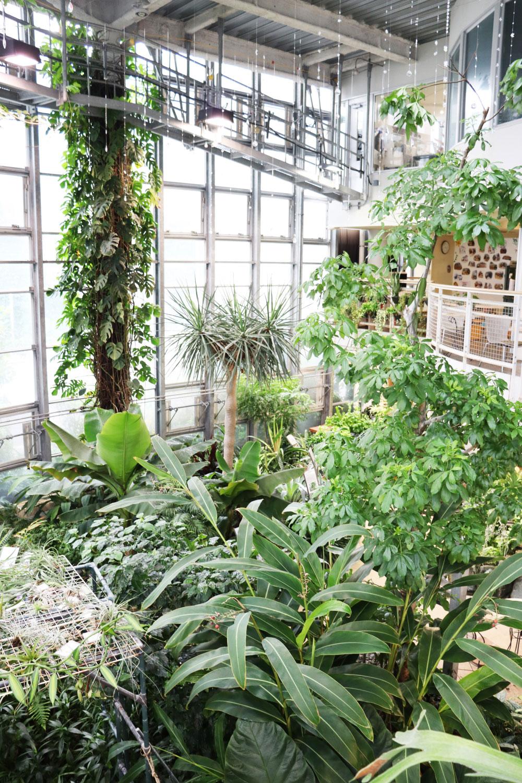 緑に包まれた気持ち良い空間が広がる。