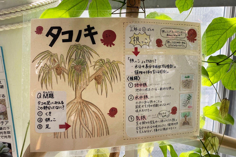 植物に添えられたイラスト付きの手書き案内板が、観察の楽しさをかきたてる。