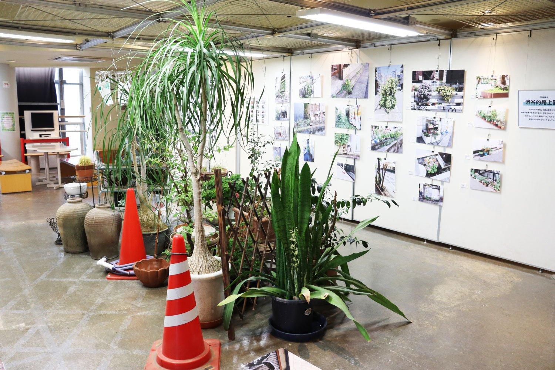 展示「渋谷的路上園芸〜これであなたも路上園芸鑑賞家〜」(2021年9月7日(火)〜10月3日(日)まで、『渋谷区ふれあい植物センター』2階展示スペースにて)。展示空間には、植物園スタッフの方が設営した「リアル路上園芸」も。