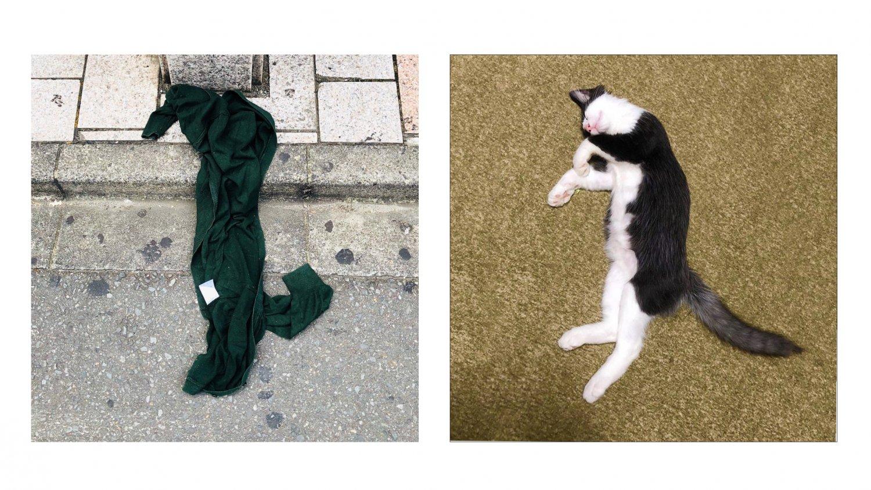 道に落ちたカーディガンと偶然同じ格好で寝ていた、藤田さんの飼い猫