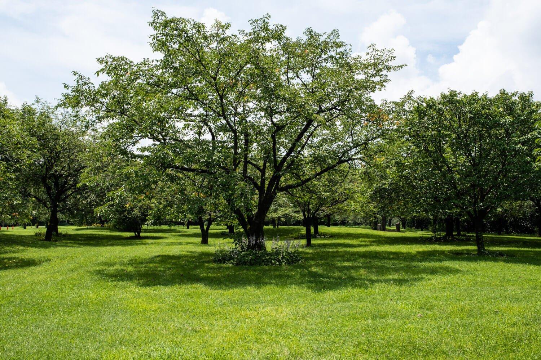 多種多様な桜の木が林立する場内は約8万3000㎡もの広さがある。
